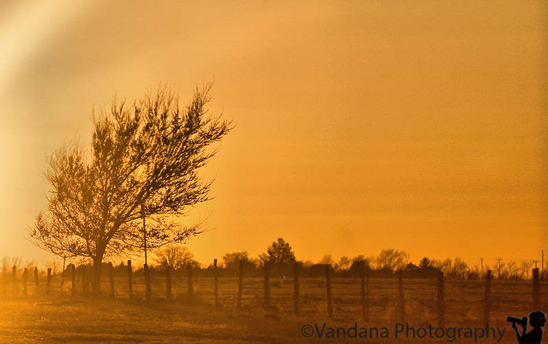 March 30, 2009 - Evening light