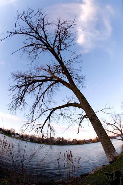 December 19, 2009 - Standing tall
