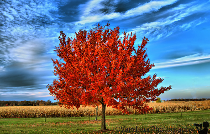 October 25, 2009 - The lone tree