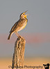 April 22, 2009 - The song of the Western Meadowlark.