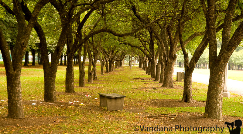 September 29, 2009 - The Green path
