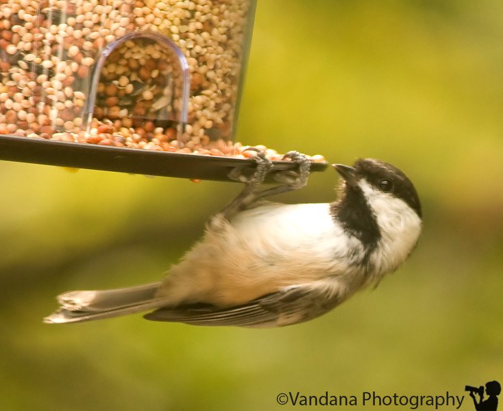 September 18, 2009 - New birdfeeder in town !