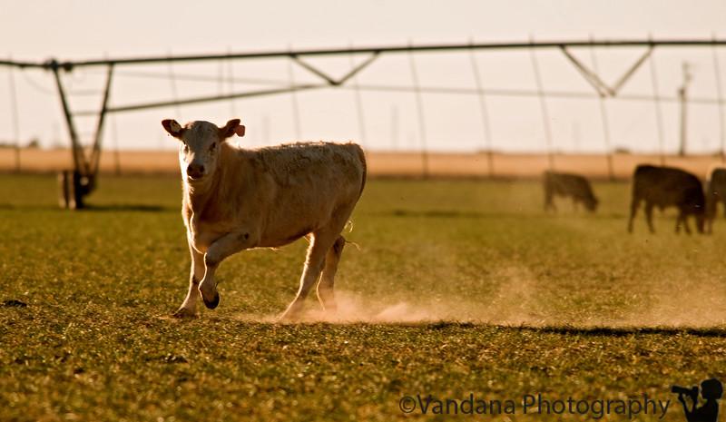 Feb 3, 2009 - Sprinting across the fields
