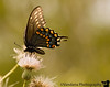 June 7, 2009 - butterfly of the day<br /> @ albuquerque botanical gardens
