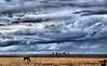 April 13, 2009 - The horse on the meadow