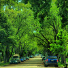 June 13, 2009 - Against each other, the trees and the cars..