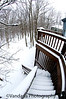 February 2, 2010 - Fresh snow