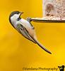 October 19, 2010 - bird at the feeder
