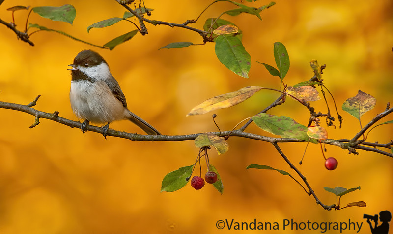 October 12, 2010 - bird in the backyard !
