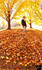 November 1, 2010 - the leaves have fallen, the last of color