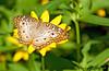 August 9, 2010 - Butterflies !