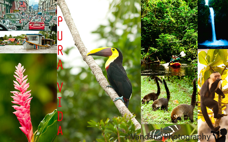 December 30, 2010 - Pura Vida!!!<br /> <br /> Recollections of CR<br /> 1. Arriving in San Jose, the traffic & the narrow roads.<br /> 2. Canoes in Tortuguero National Park<br /> 3. At Arenal Manoa<br /> 4. Toucan in Tortuguero<br /> 5. V & K go kayaking in Tortuguero<br /> 6. Raccoons in Arenal<br /> 7. La Fortuna waterfall<br /> 8. Capuchin monkey<br /> 9. Butterfly at Fincas Naturales<br /> <br /> Farewell Costa Rica, we'll be back soon!