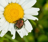 June 28, 2010 - summer bugs
