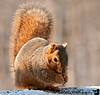 February 17, 2010 - a squirrel visits<br /> <br /> thank you for all the comments on my bird shots lately !!