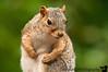 June 9, 2010 - the model squirrel