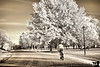 November 10, 2010 - cycling the IR roads<br /> <br /> thanks for all the wonderful comments on my silhouette shot yesterday !