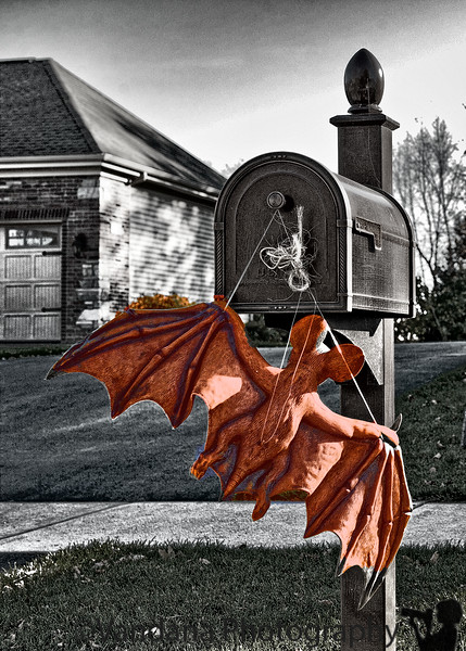 October 30, 2010 - Bat at the mailbox ! <br /> <br /> happy Halloween !