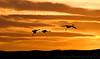 January 24, 2010 - Sandhill crane silhouettes at Bosque