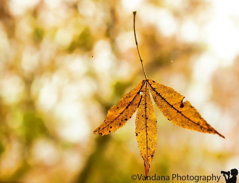 November 4, 2010 - The last leaf