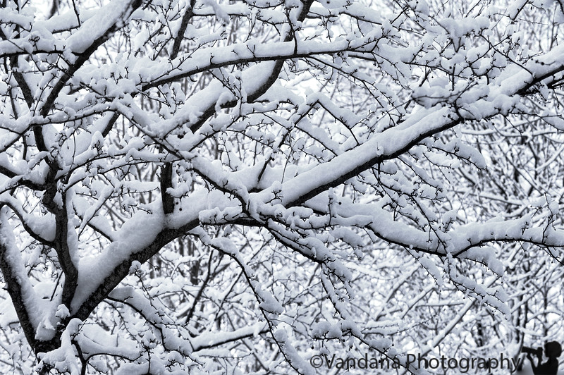 December 6, 2010 - Snow white