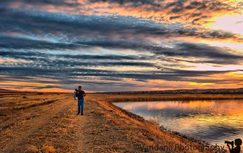 January 17, 2010 - At Bosque Del Apache National wildlife refuge - the annual photography pilgrimage !  More pics coming up here