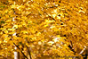 October 20, 2010 - what makes the background yellow ?!