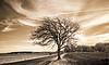 November 15, 2010 - The lone tree
