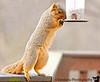 November 18, 2010 - The squirrels attack !