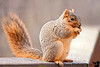 November 23, 2010 - lunch for the squirrel