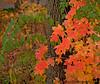 October 22, 2010 - leaves