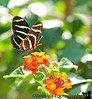 August 21, 2010 -more butterfly action