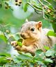June 22, 2010 - The backyard squirrel again