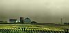 August 7, 2010 - Farmland in Illinois