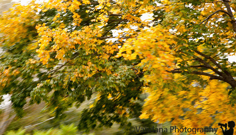 October 1, 2010 - a breezy fall