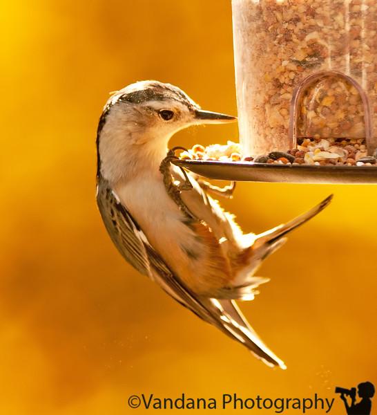 October 23, 2010 - Bird feeder action
