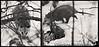 "February 1, 2010 - An <a href=""http://en.wikipedia.org/wiki/Opossum"">opossum<a> in the backyard"