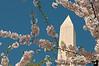 April 2, 2010 - Washington Monument in spring