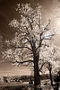 April 18, 2010 - Spring time in the IR world