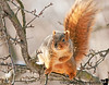 Feb 10, 2011 - squirrel times