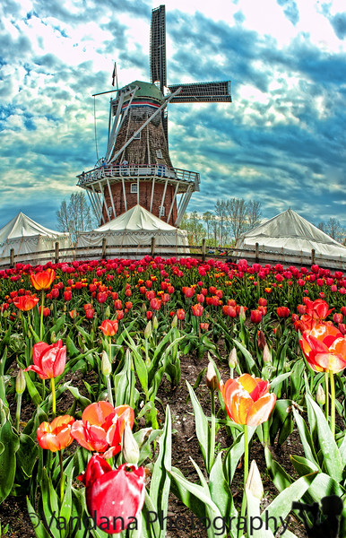 May 7, 2011 - Windmill Island Gardens, Holland, MI - we are at Tulip Festival, Holland MI ! about a million tulips here during this time attracting a million visitors every year !<br /> <br /> Happy Mother's day !