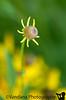 July 31, 2011 - wild flowers