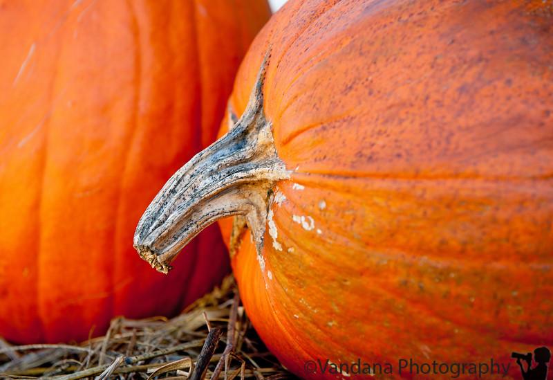 October 31, 2011 - Happy Halloween !