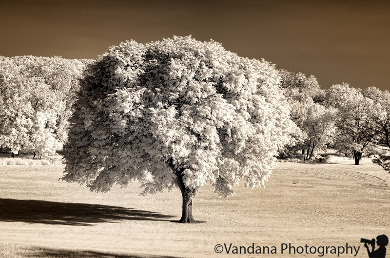 June 6, 2011 - the silver tree