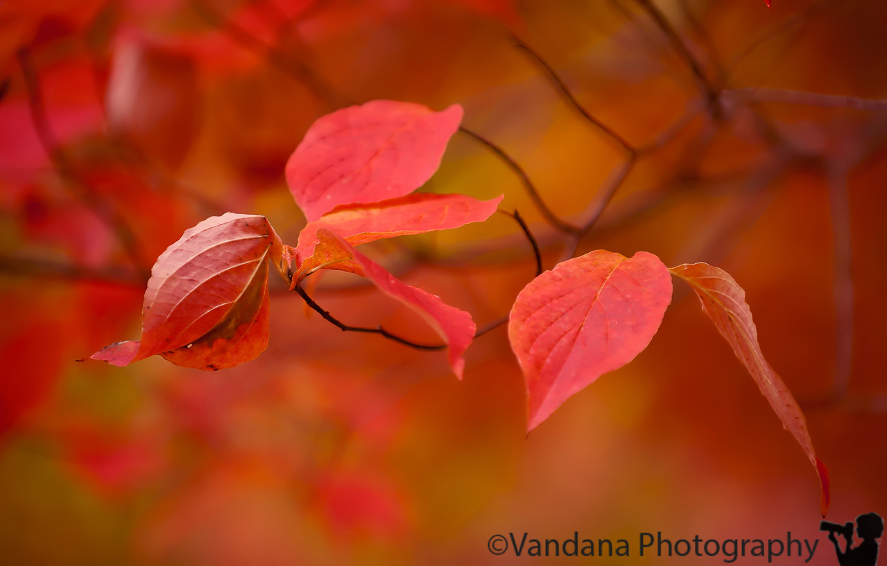October 12, 2011 - Fall leaves