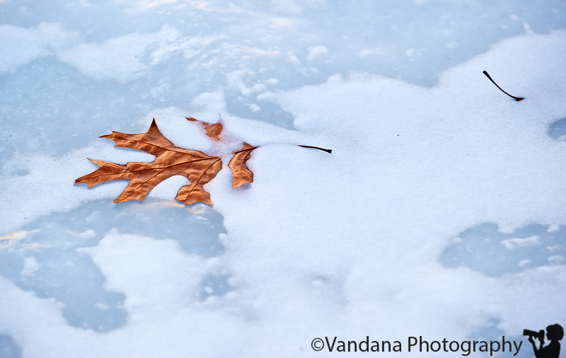 Jan 7, 2011 - Frozen in time
