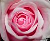 Feb 17, 2011 - Pink