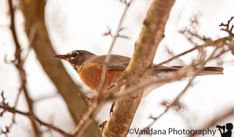Feb 20, 2011 - Robin welcomes the warm weather - 30-40's, but certainly warmer !