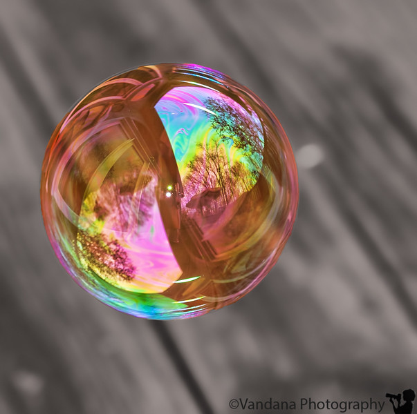 May 4, 2011 - Living in a bubble<br /> <br /> How it was taken - K makes bubbles on the deck, many many of them, and I focus manually with a 70-200mm. not many were in focus ! only post processing was a crop and desaturating the bg.