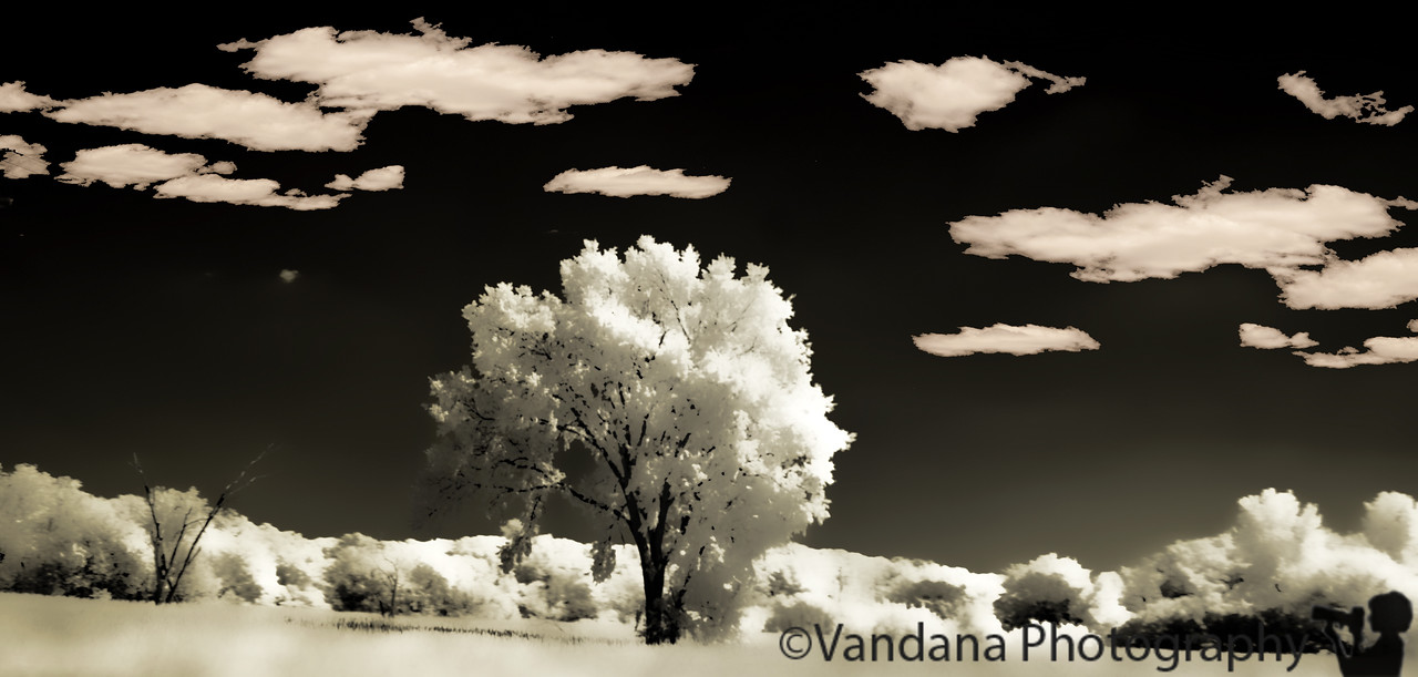 July 6, 2011 - the tree, in IR