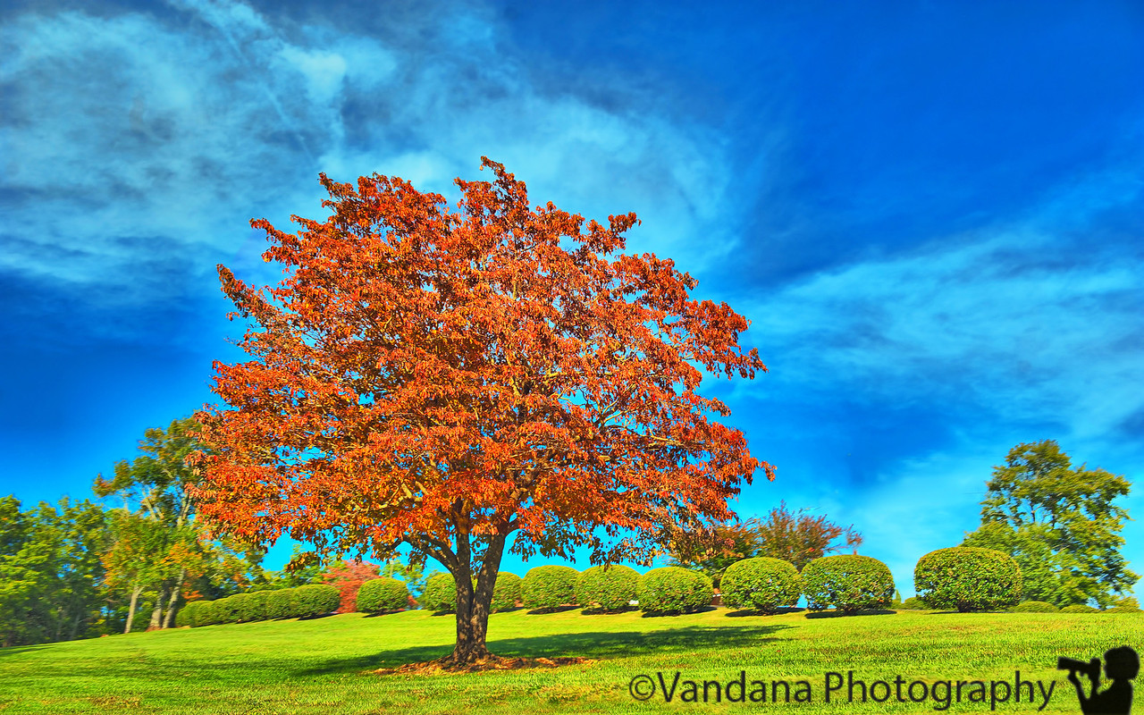 October 21, 2011 - The red tree
